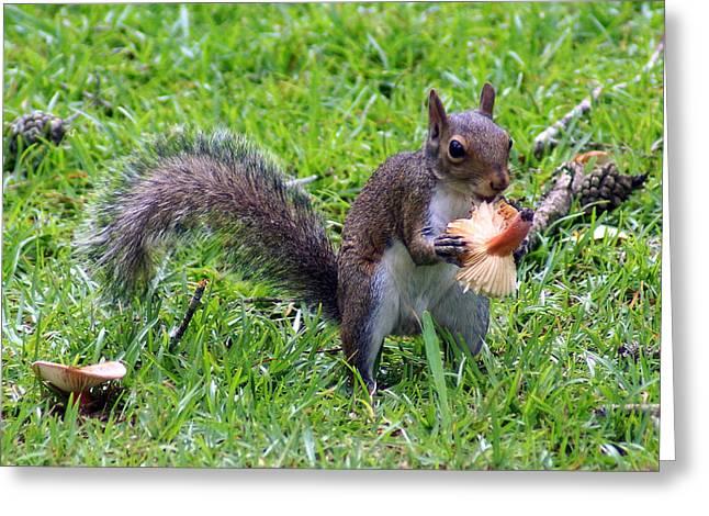 Squirrel Eats Mushroom Greeting Card by Kim Pate