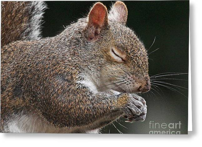 Squirrel Giving Thanks Greeting Card