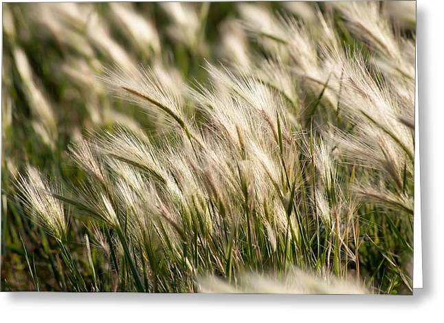 Greeting Card featuring the photograph Squirrel Grass by Fran Riley