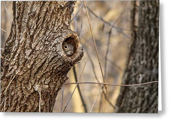 Squirrel Hole Greeting Card by Jill Bell