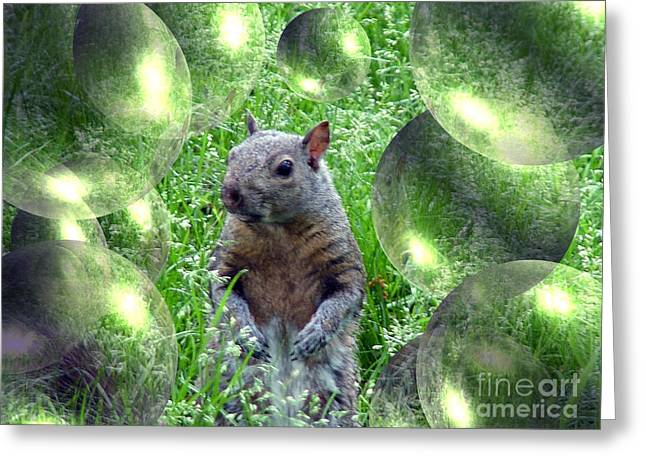 Squirrel In Bubbles Greeting Card