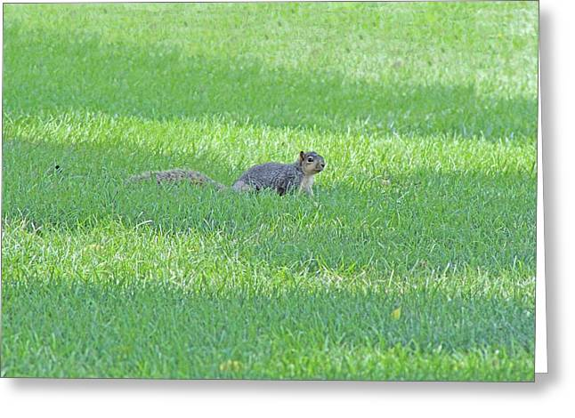 Greeting Card featuring the photograph Squirrel In Grass by Lorna Rogers Photography