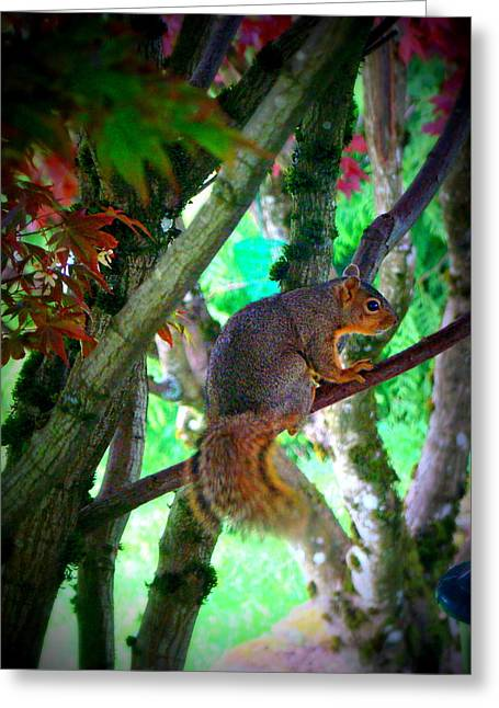 Squirrel In My Tree Greeting Card