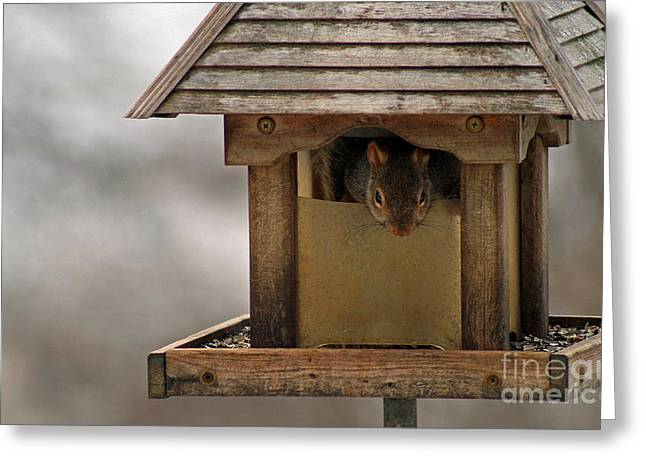 Squirrel In The Bird Feeder Greeting Card