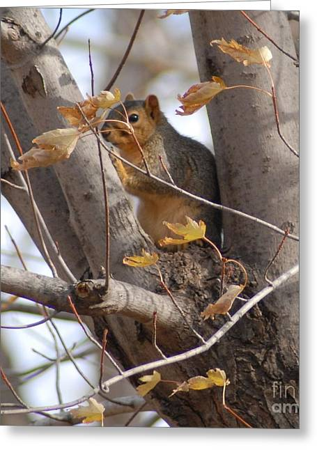 Squirrel In The Tree Greeting Card
