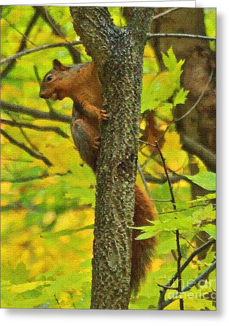 Squirrel In The Woods 2 Oil Greeting Card
