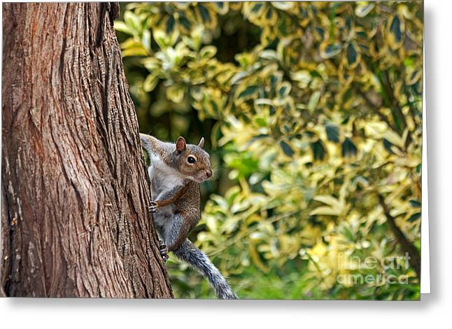 Greeting Card featuring the photograph Squirrel by Kate Brown