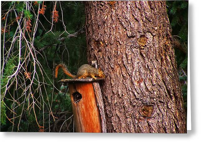 Squirrel On Top Of Birdhouse Greeting Card by Chris Flees