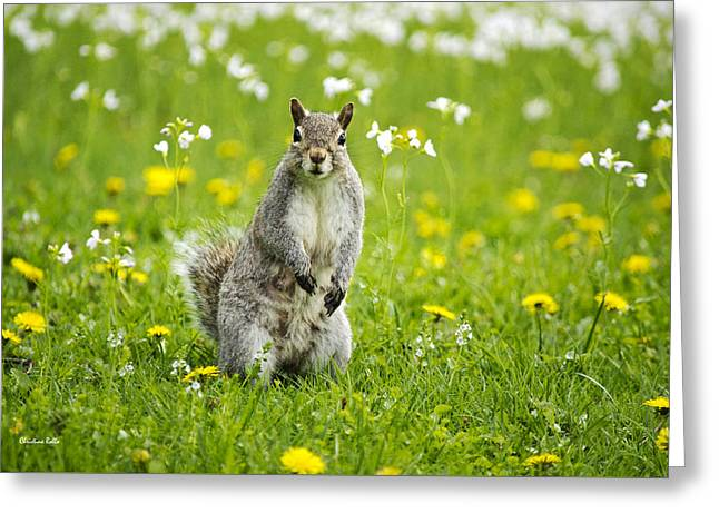 Squirrel Patrol Greeting Card by Christina Rollo