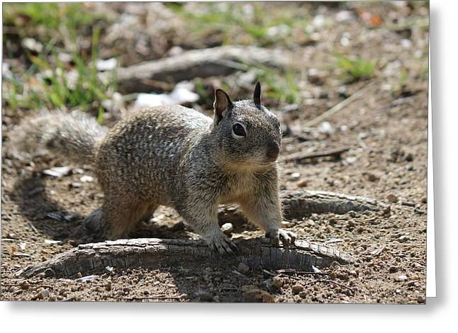 Squirrel Play  Greeting Card