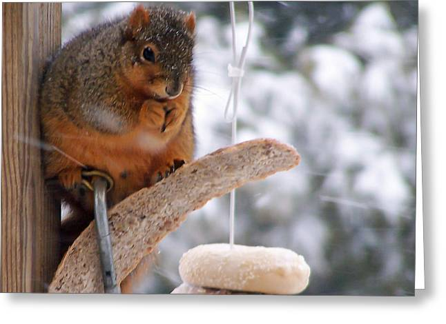 Squirrel Snack II Greeting Card by Jim Finch