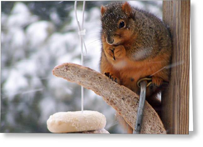 Squirrel Snack IIi Greeting Card