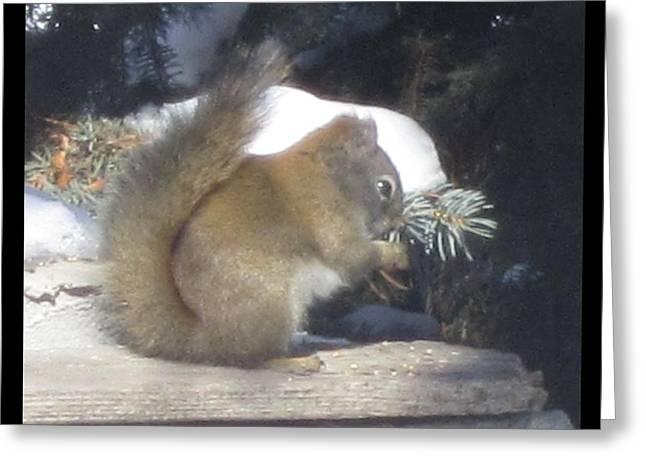Squirrel Three Greeting Card
