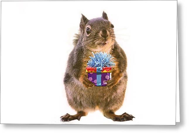 Squirrel With Gift Greeting Card