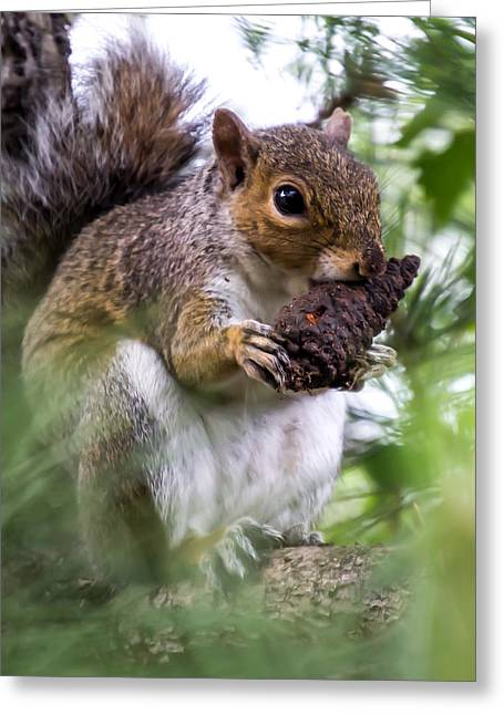 Squirrel With Pine Cone Greeting Card
