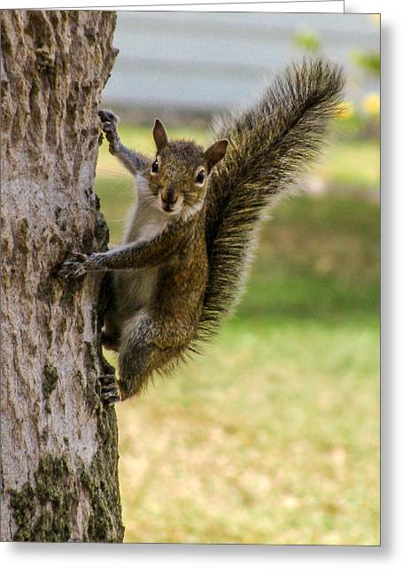 Squirrel Greeting Card by Zina Stromberg