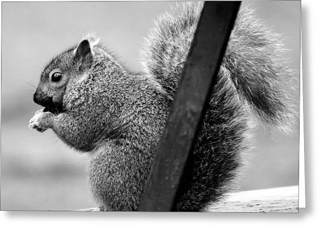 Greeting Card featuring the photograph Squirrels by Ricky L Jones