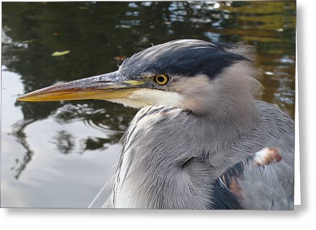 Greeting Card featuring the photograph Sr Heron  by Cheryl Hoyle
