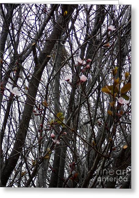 Greeting Card featuring the photograph Spring Blossoms by Carla Carson