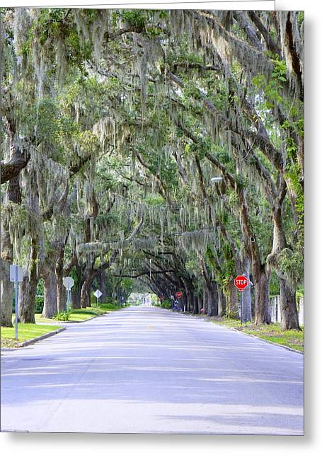 St. Augustine Road Greeting Card by Laurie Perry