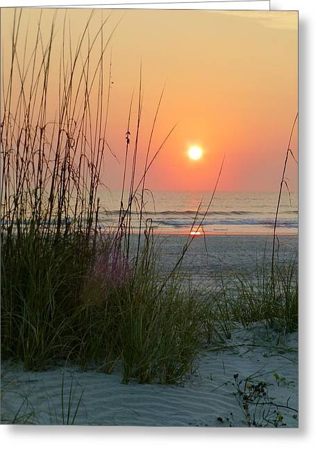 St. Augustine Sea Oats Greeting Card