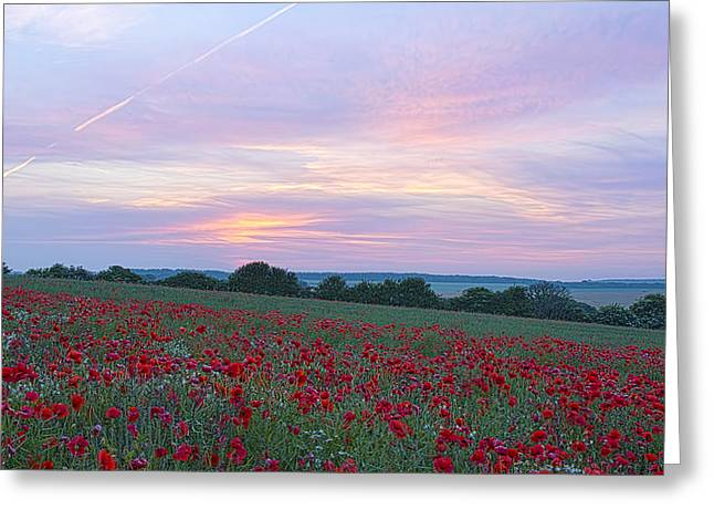 St Margarets Poppies Greeting Card