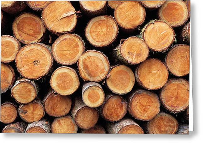 Stack Of Logs In Forest, Burrator Greeting Card by Panoramic Images