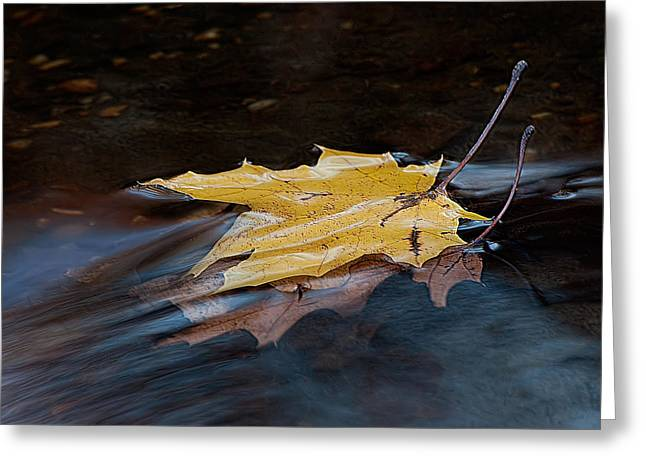 Stacked Autumn Leaves On Water Greeting Card