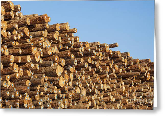 Stacks Of Logs Greeting Card