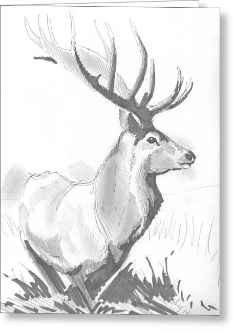 Stag Drawing Greeting Card by Mike Jory