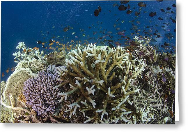 Staghorn Coral And Fish Koro Island Fiji Greeting Card