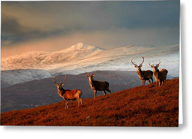 Stags At Strathglass Greeting Card