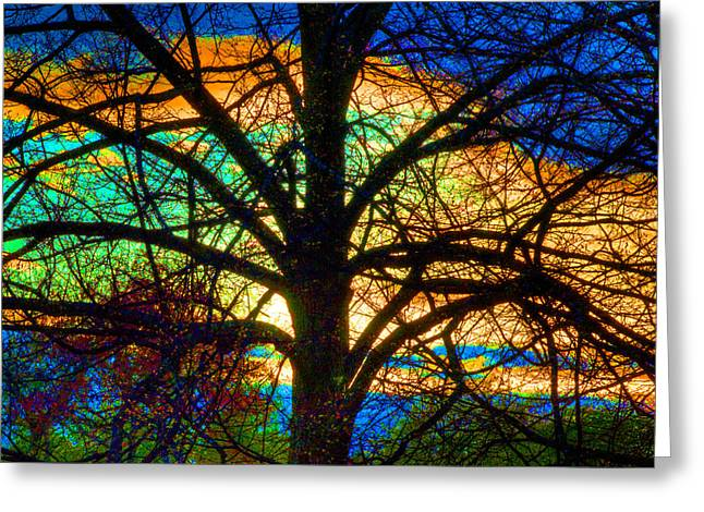 Greeting Card featuring the photograph Stained Glass Tree by Rob Huntley