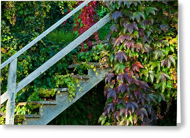Stairs2 Greeting Card by Michele Wright