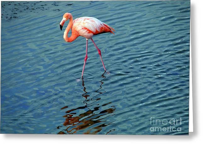 Stalking Flamingo In The Galapagos Greeting Card