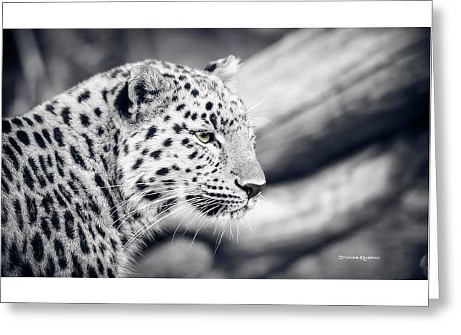 Greeting Card featuring the photograph Stalking Prey by Stwayne Keubrick