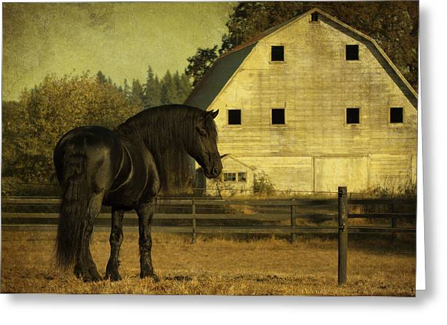 Stallion At Rest D1535 Greeting Card by Wes and Dotty Weber
