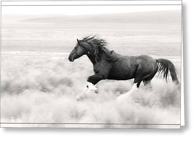Stallion Blur Greeting Card