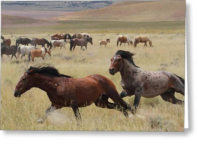 Stallion Chase Greeting Card