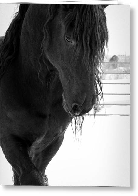 Stallion Essence Greeting Card