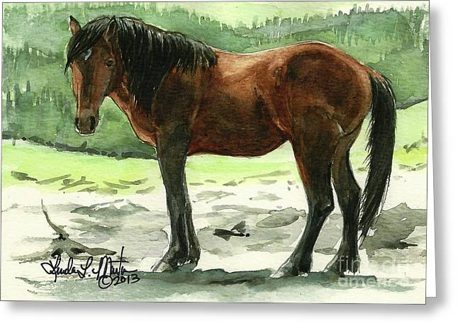 Stallion Of The Clear-cut Greeting Card