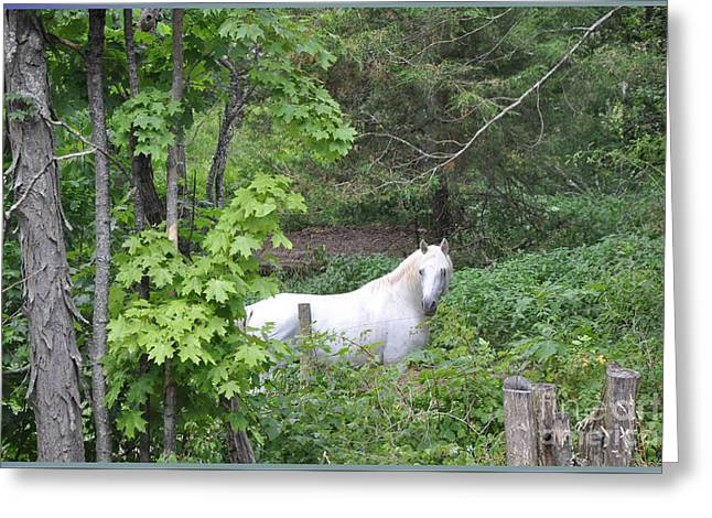 Stallion On Independence Day Greeting Card by Patricia Keller