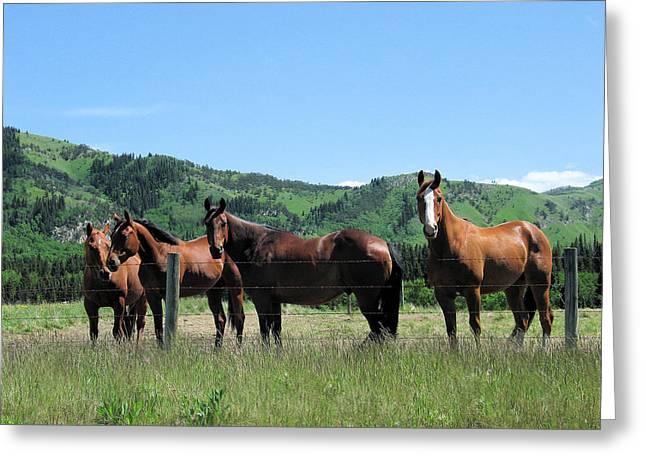 Stampede Horses Greeting Card