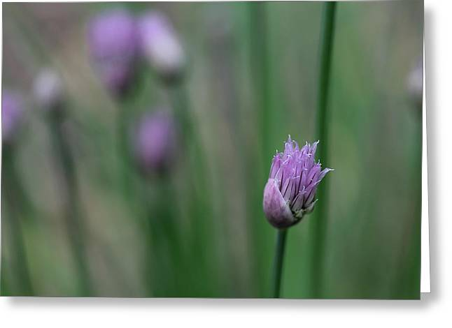 Not Just A Pretty Flower Greeting Card by Debbie Oppermann