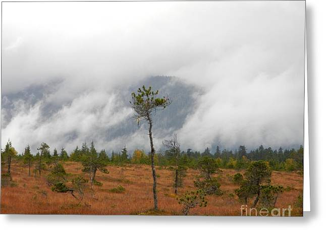 Greeting Card featuring the photograph Stand Alone by Laura  Wong-Rose