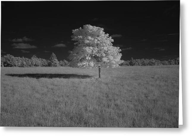 Stand Alone Greeting Card by Steve Gravano