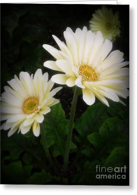 Stand By Me Gerber Daisy Greeting Card by Lingfai Leung