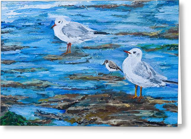 Sea Birds Wait Greeting Card