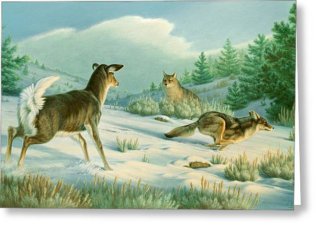 Stand-off  -whitetail Doe And Coyotes Greeting Card