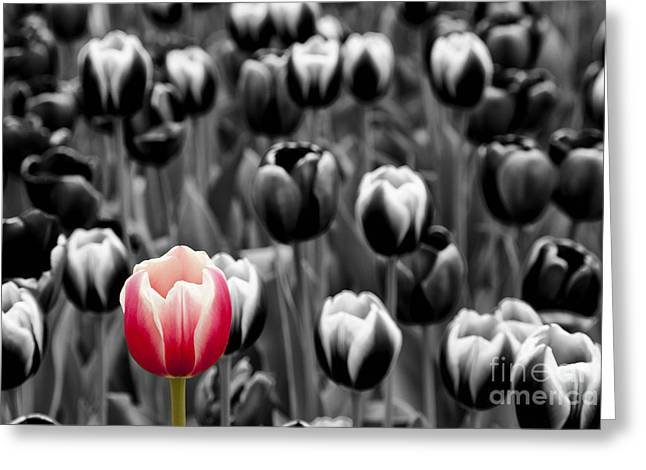 Stand Out From The Crowd... Greeting Card